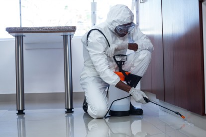 Emergency Pest Control, Pest Control in Clapton, E5. Call Now 020 8166 9746